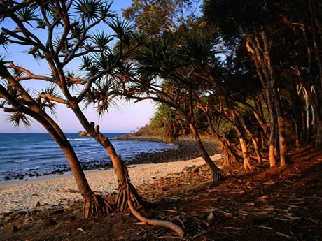 Tea Tree Beach Noosa national park Queensland Australia