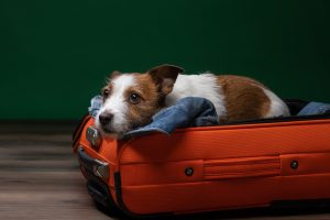 How Do I Move My Pets To Australia From South Africa-min